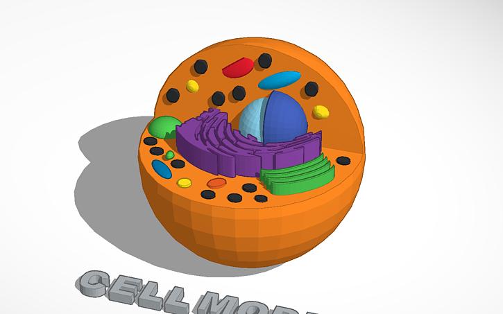 3D design Cell Model   Tinkercad