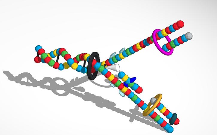 Dna Replication 3d 3D design DNA Replicat...
