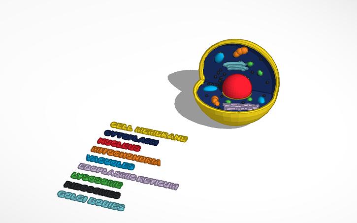 3d Animal Cell Diagram Project 66585 Infobit